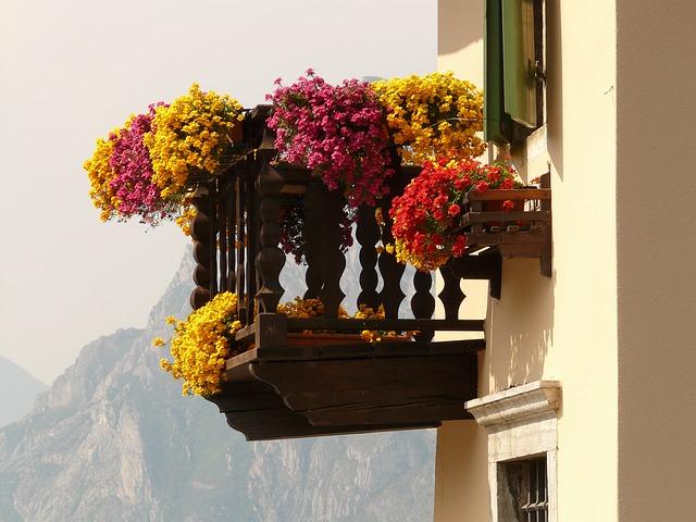 pelargónie na balkóně