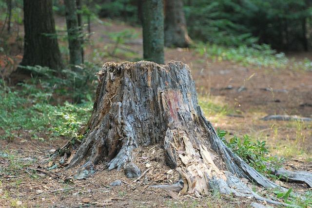 pařez v lese
